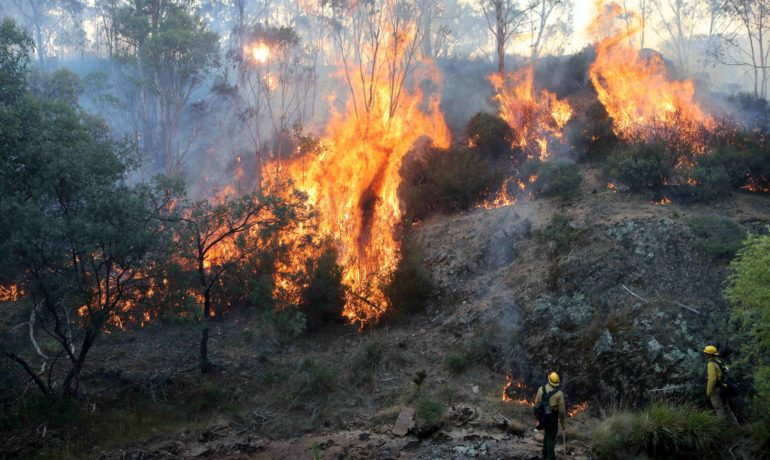 Freemasons give $150,000 for victims of Australian bush fires